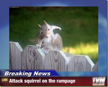 attack squirrel_thumb[5]