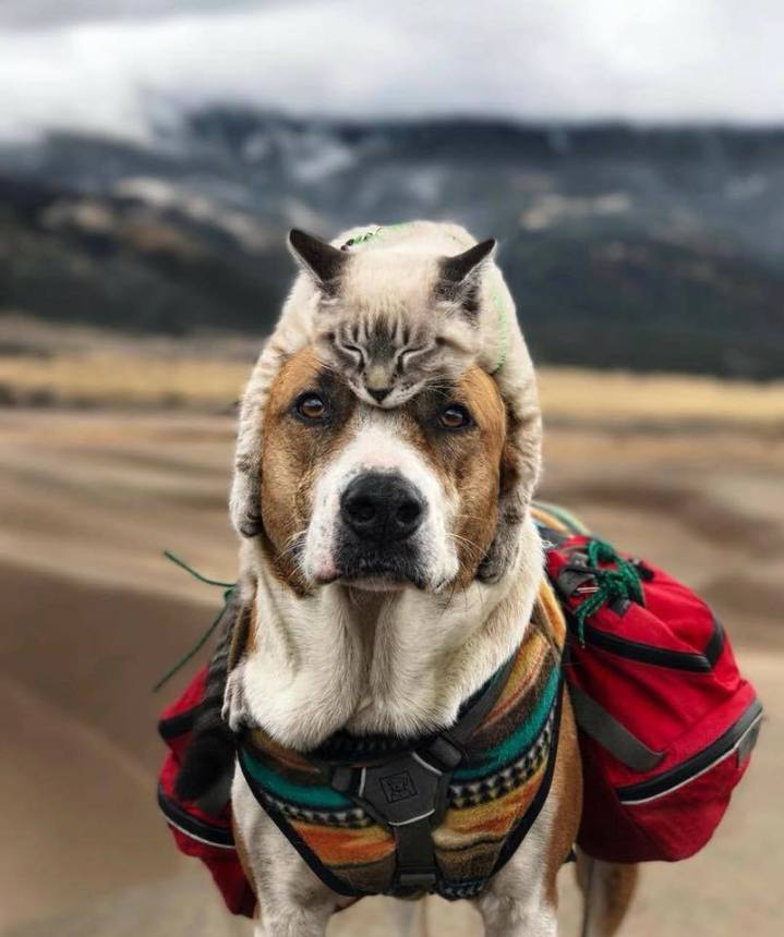 cat hat for dogs