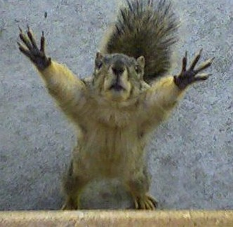 funny-pictures-say-anything-squirrel