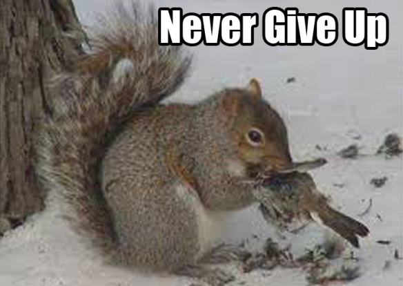 mammals-never-give-up
