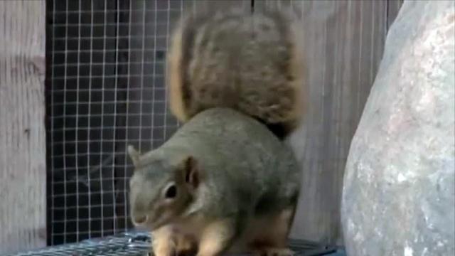 squirrel-1478261936