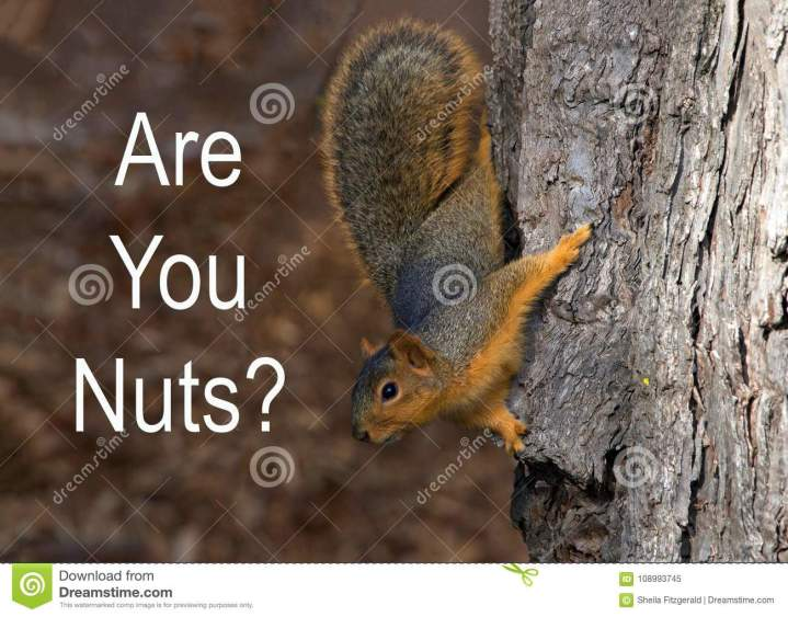 squirrel-holding-onto-tree-you-nuts-text-open-space-fox-squirrel-sciurus-niger-also-known-as-eastern-fox-squirrel-108993745