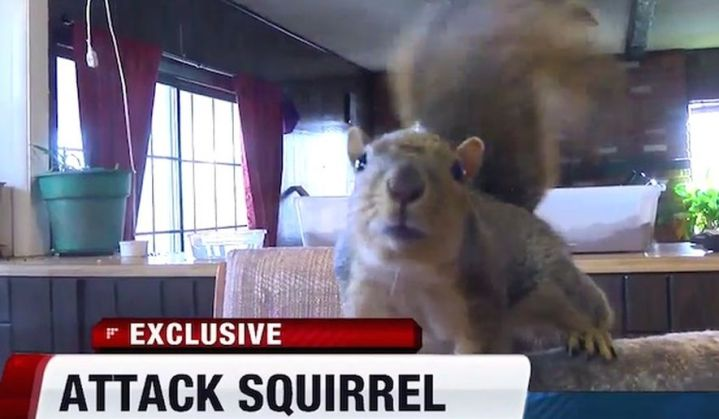 squirrel_c0-0-600-350_s885x516