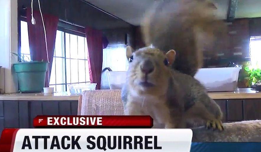 squirrel_c0-0-600-350_s885x516