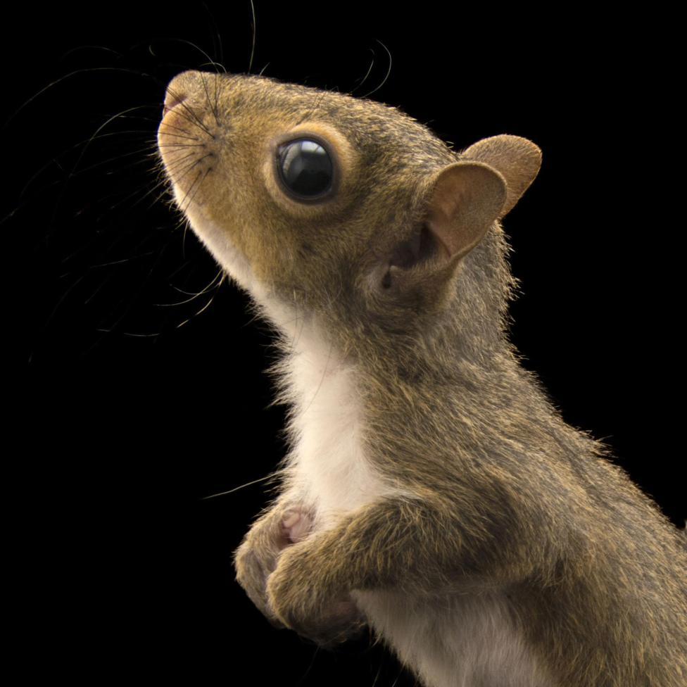 squirrels_thumb.ngsversion.1486665011599.adapt.1900.1
